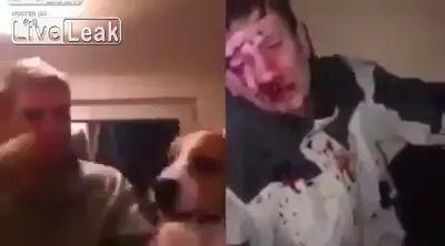 Наказание человека за избиение собаки 18+