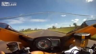 Змея на мотоцикле на 250км/ч