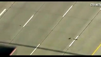 Camera crews captured family of ducks tries to cross highway