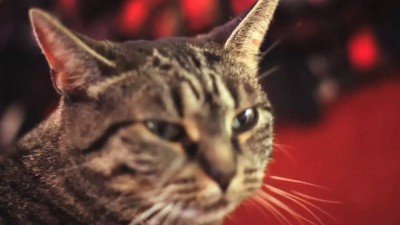 Кот рокер