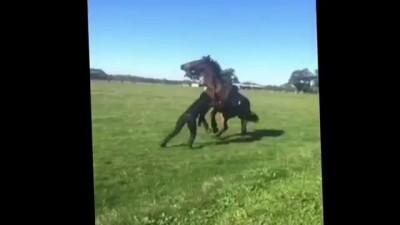 Девушка послала коня - а он её.