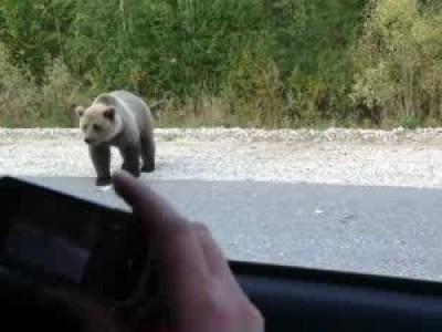Встреча с медведем