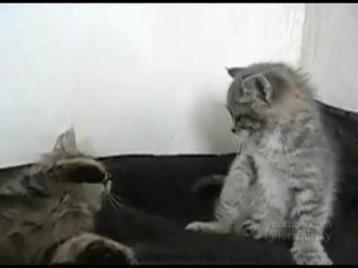 Не шути с котом Брюса Ли!