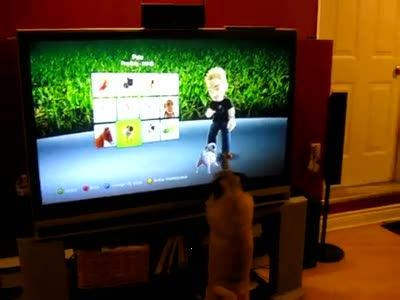 Собака в телевизоре