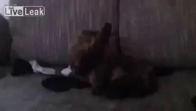 Немецкий кот