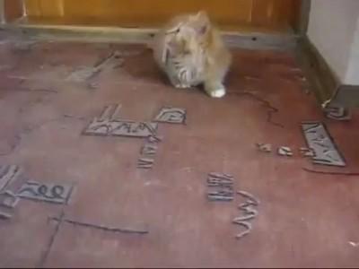 Как отучить кота от сигарет?