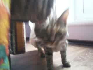 Кошка и Пакет