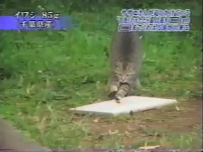 Кот проверяет свою челюсть