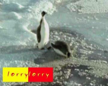 Нехороший Пингвин