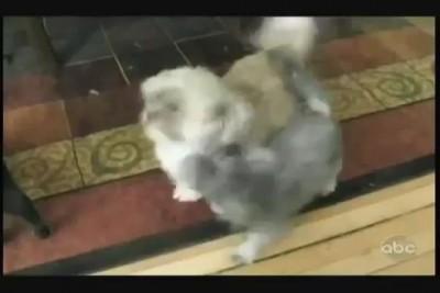 Смешное видео: собака орет, как человек =))