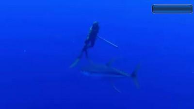 Подводная охота.