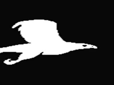 О чём поёт ночная  птица