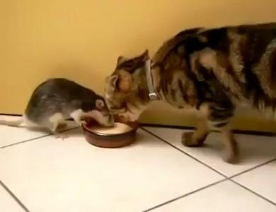 Киска + крыска + миска