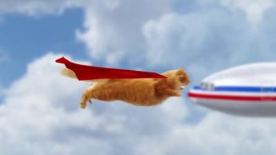 Супер кот спешит на помощь:)