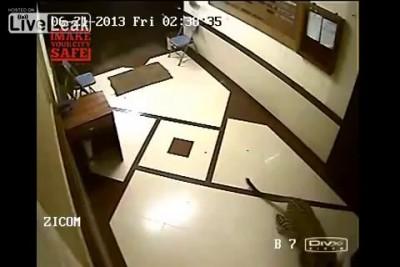 Леопард напал на собаку и загрыз ее