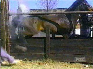 Лошадь удар копытом