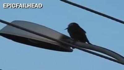 Woodpecker Fail [original]