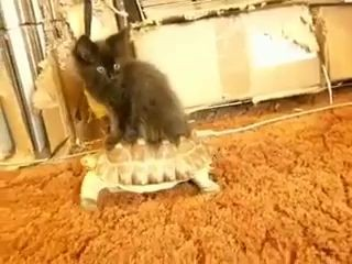 Самый Ленивый Кот На Свете
