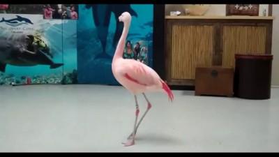 Танцующий фламинго .