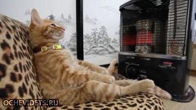Кот балдеет перед домашним камином