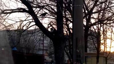 Оборзевшая ворона гоняет кота