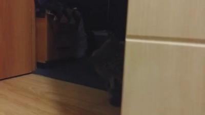 Хотел напугать кота