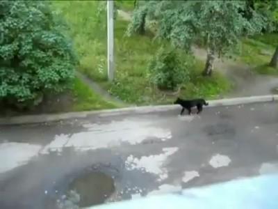 Умный кот ;)