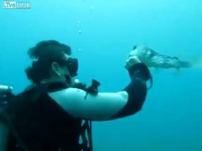 Дайвер спас рыбу-шар