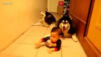 Собаки повторяки