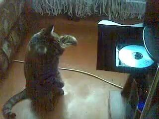 КОТ VS CD ROM
