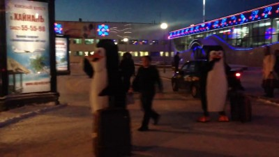 Пингвины в аэропорту Сургута