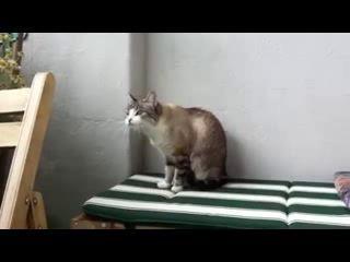 кот сошёл с ума