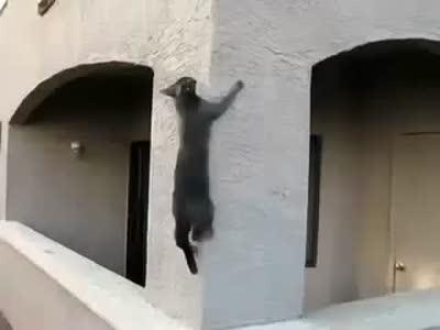 Коты - ниндзя