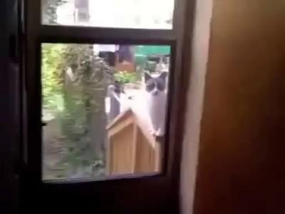 Пьяного кота не пускают домой