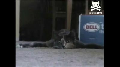Кота плющит