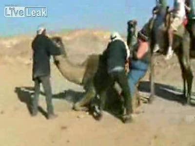 для верблюда слишком тяжело