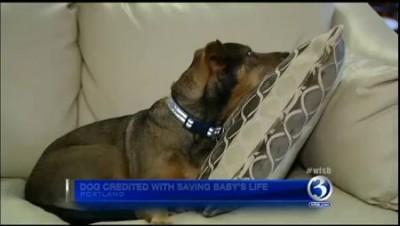 Приютский пес спасл дочь своих хозяев