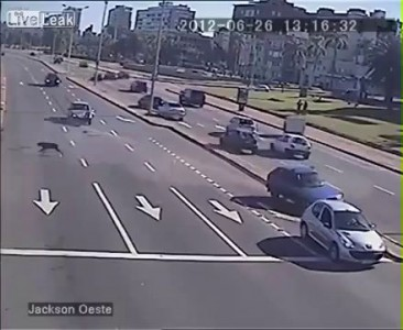 От удара собака выпадает из машины .