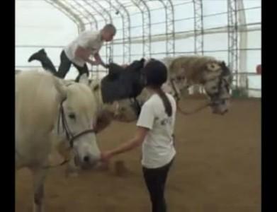 Лошадка испугалась
