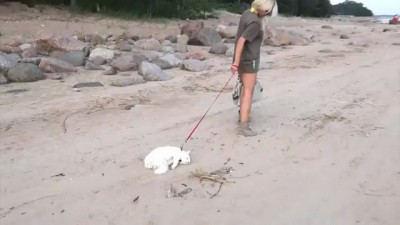Кот на пляже