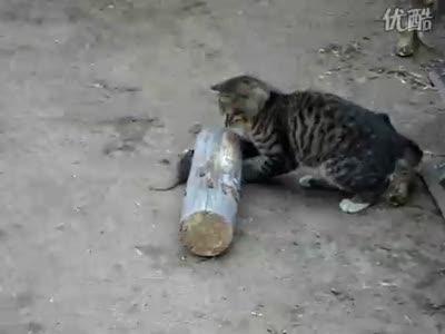Котенок играет с мышью