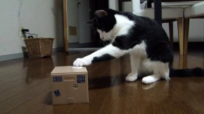 Если кот мешает и нужно его занять надолго