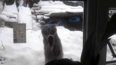 Еще один кот, который просится домой