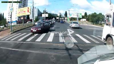 Кот на пешеходном переходе