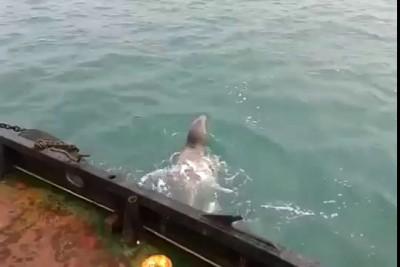 Тюлень попросился на борт матросом