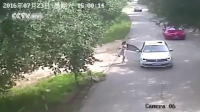 Камера сняла, как тигр убил женщину в сафари-парке Китая