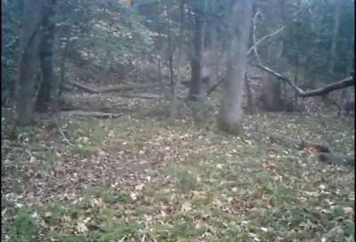 Где то в вашингтонском парке кто-то охотится на косулю ...
