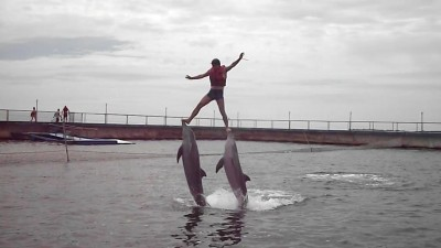 покатушки с дельфинами