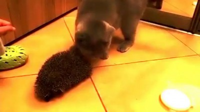Кот и ёж