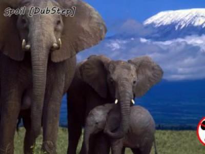 Elephants Brig - Spoil [Dubstep]